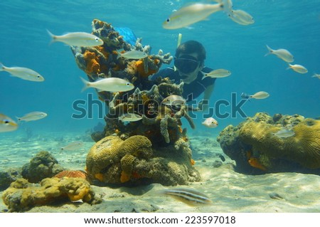 Underwater scene with snorkeler looking strange forms of sea life, Caribbean sea - stock photo