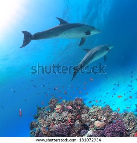 Underwater scene with two dolphins and colorful coral reef full of red fish. Marine life postcard - stock photo