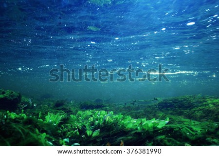 underwater scenery, algae, clean clear water, mountain river cleanliness - stock photo
