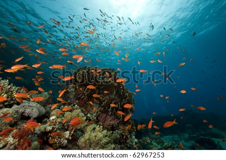 underwater scenery at Yolanda reef