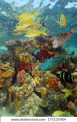 Underwater scenery in a coral reef with tropical fish and colorful marine life, Caribbean sea, Bay islands, Roatan, Honduras - stock photo