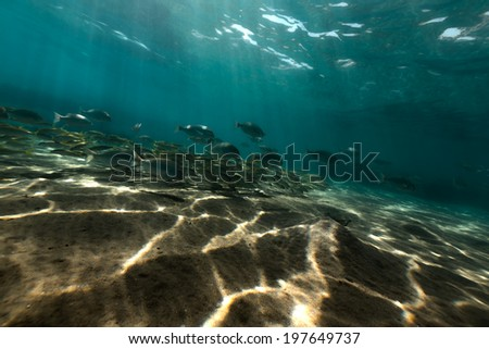 Underwater scenery in the Red Sea