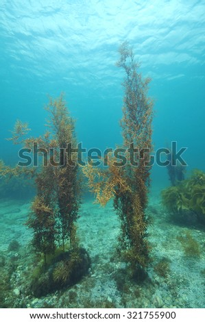 Underwater scenery of Matheson Bay in New Zealand during a day with a very clear water and good visibility. - stock photo