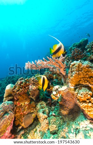 Underwater scenery of the Red Sea - stock photo