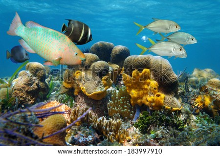 Underwater scenery with tropical fish in a coral reef, Caribbean sea, Bocas del Toro, Panama