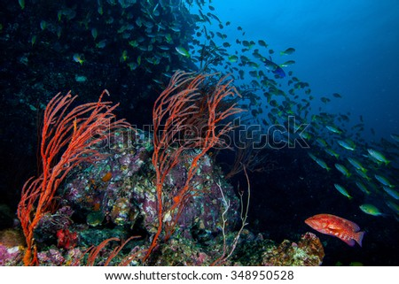 Underwater sea and  - stock photo