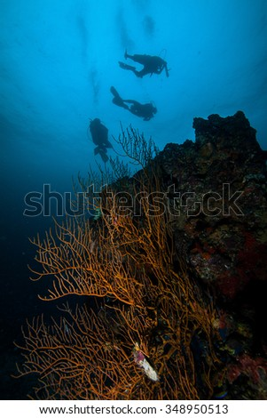 Underwater sea and scuba divers