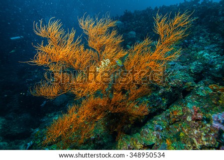 Underwater sea and soft coral - stock photo