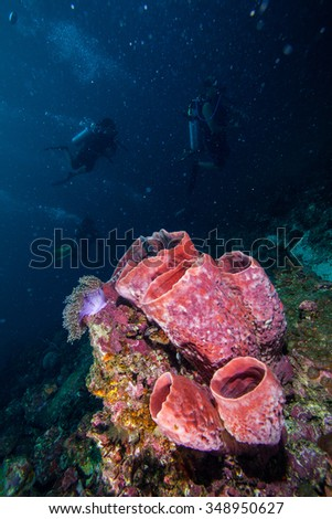 Underwater sea and sponge.