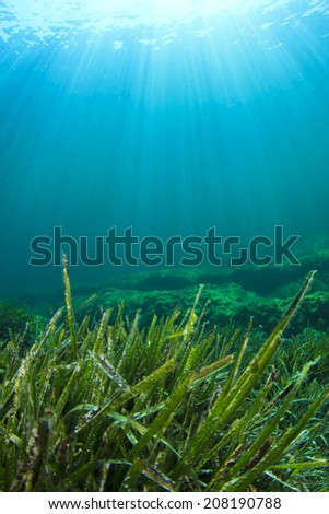 Underwater Sea Grass - stock photo