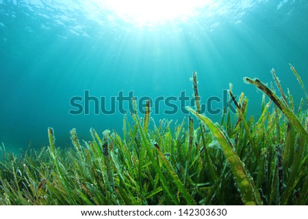 Underwater Sea Grass and Sun - stock photo