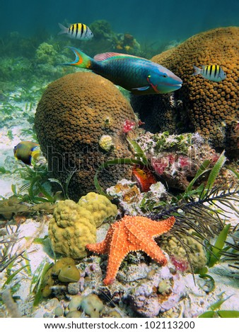 underwater coral photography  Underwater seabed in the Cari...