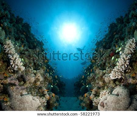 underwater seascape - stock photo