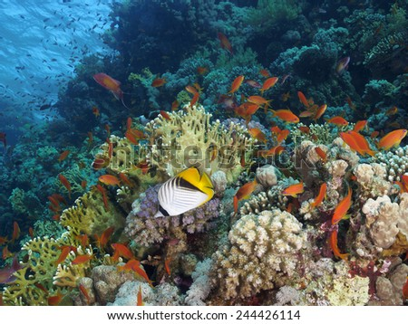 Underwater seascape in Ras Mohhamed marine park - stock photo