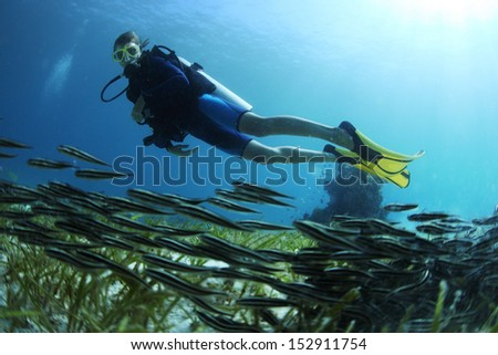 Underwater shoot of a diver watching a school of tiny fish finning over a bottom - stock photo