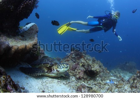 Underwater shoot of a diver watching a sea turtle (Chelonioidea)  on bottom - stock photo