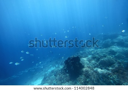 Underwater shoot of a sea bottom with coral reef and school of fish over it - stock photo