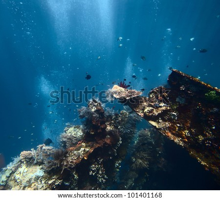 Underwater shoot of a ship wreck's part USAT Liberty with school of a fish - stock photo