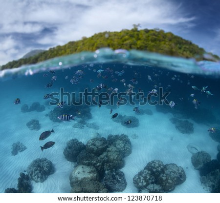 Underwater shoot of a tropical sea with school of fish and green island on the background (out of focus) - stock photo