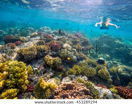 Underwater shoot of a young boy snorkeling and diving in a tropical red sea coral reef with Klunzinger's Wrasse and other fish in Egypt - stock photo