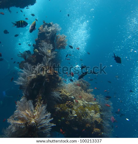 Underwater shoot of part of shipwreck and corals on it surface