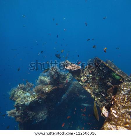 Underwater shoot of USAT Liberty wreck. Tulamben, Bali island, Indonesia - stock photo