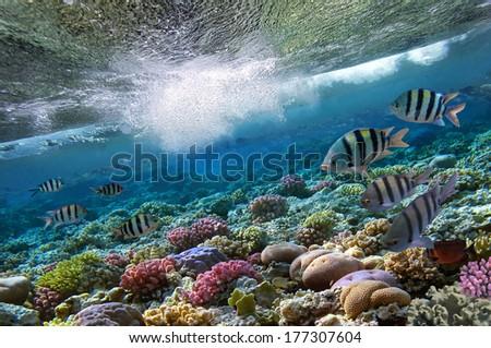 Underwater shoot of vivid coral reef.  - stock photo