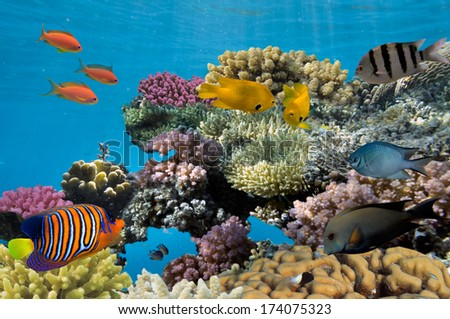 Underwater shoot of vivid coral reef with a fishes.