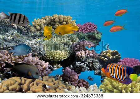 Underwater shoot of vivid coral reef with a fishes. - stock photo