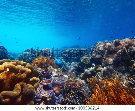 Underwater shoot of vivid coral reef with a tiny fishes in clear water - stock photo