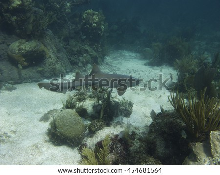 underwater shot of a nurse shark swimming in a coral reef - stock photo