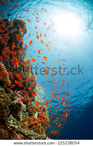 Underwater shot of the coral reef in Ras Muhammad National Park, Egypt - stock photo