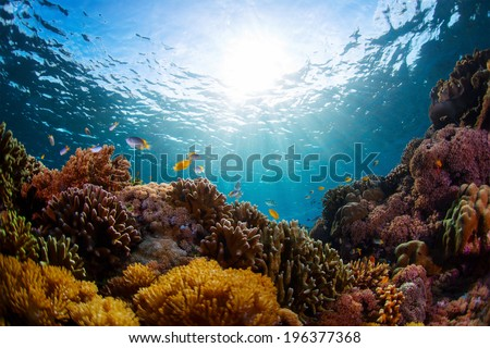 Underwater shot of vivid coral reef with fishes - stock photo