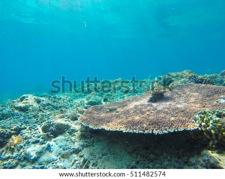 Underwater sunbeams through the water surface viewed from the seabed on a reef of the sea, natural scene
