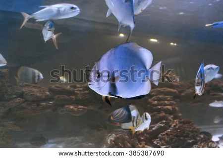 underwater template fishes shoal swimming under wave surface on blue background - stock photo