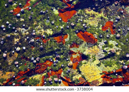 Underwater tidal communities of atlantic seashore in New England during their famous Autumn - stock photo