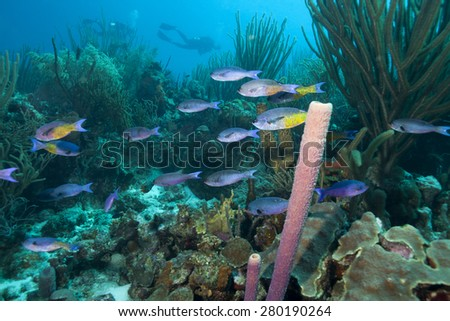 Underwater tropical fish and coral reef, Bonaire