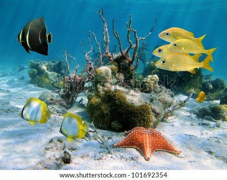 underwater coral photography  Underwater tropical fish with a