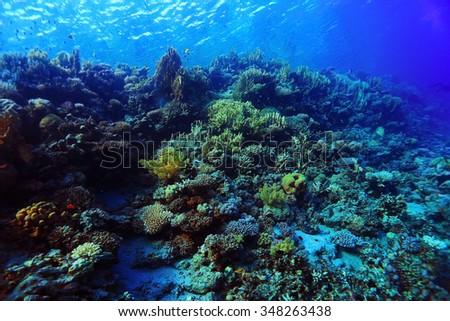 Underwater tropical sea view - stock photo