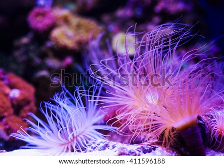 Underwater, Underwater World, Coral Reef - stock photo