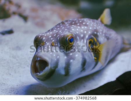 Underwater, Underwater World, corals and beautiful fish - stock photo