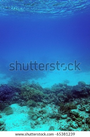 Underwater view of coral reef, Red Sea, Egypt
