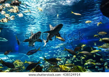 Underwater view of marine life - stock photo