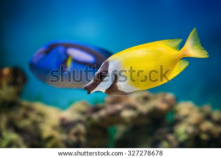 Underwater view of tropical fishes