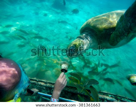 Underwater Views of manta ray and turtle feeding - Views around the Caribbean island of Curacao