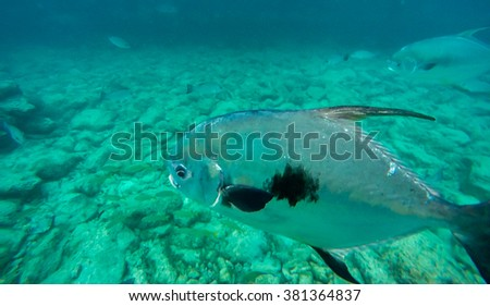 Underwater Views - Views around the Caribbean island of Curacao