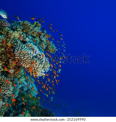 Underwater world discovered. Red sea coral reef full of colorful small fish. Dark blue ocean background - stock photo
