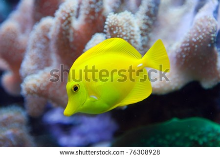 Underwater world. Fishes in corals. - stock photo