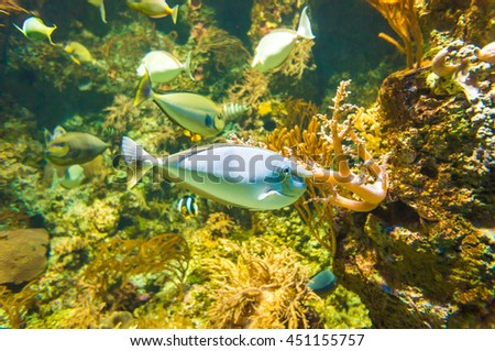 Underwater world of exotic fishes in an aquarium, Singapore SEA
