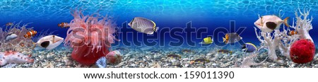 Underwater world - panorama - stock photo